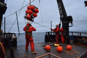 Recovery of the CEO biochemical mooring